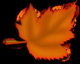 Maple Leaf 160x160